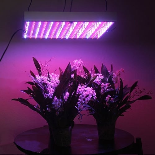 By Sunshine 117 - http://www.buynicer.com/news/How+to+Use+LED+Grow+Lights%3F_nwid500015.html